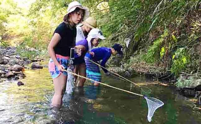 川でタナガエビを獲る子ども達