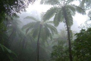 亜熱帯の森金作原原生林体験ツアー
